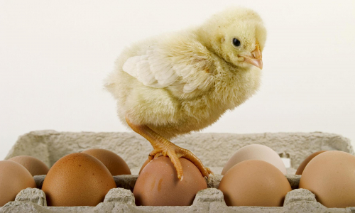 Врач рассказала, что в яйцах страшнее холестерина