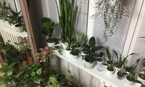 Ученый перечислил опасные для человека комнатные растения