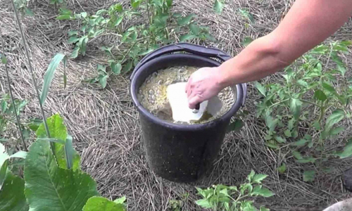 Чем подкормить растения весной: понадобятся яйца и дрожжи